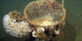 Giant deep-sea sponge