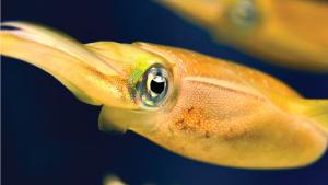 news_article_aquarium