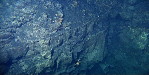 Spider crab on a lava flow outcrop