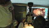 examining galatheid crabs