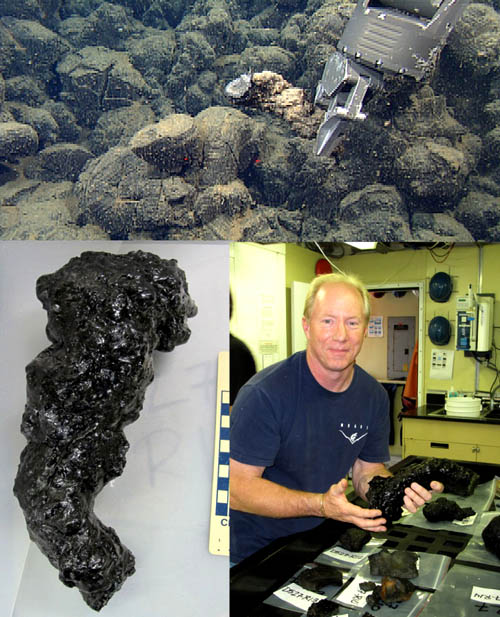 Convoluted pillow bud being collected (top), and cleaned up in the lab (bottom; scale bar in centimeters), while Chief ROV Pilot Knute Brekke admires his the specimen he collected.