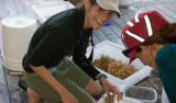 Alana Sherman taps pieces of Sargassum in a plastic bin to dislodge attached animals.