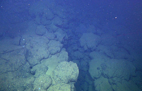 A fault observed during today's dive. Many faults such as this one make up the Tamayo transform fault system.
