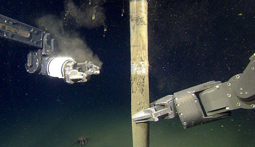 The ROV's manipulator arm retrieves a full, 120-centimeter core of sediment.
