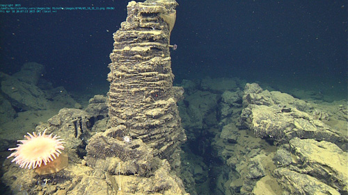 Looks like an underwater garden. An anemone is to the left of a lava pillar. This pillar formed in a lava lake and originally supported a solidified crust that has since collapsed around it, and the solidified lake has been faulted.