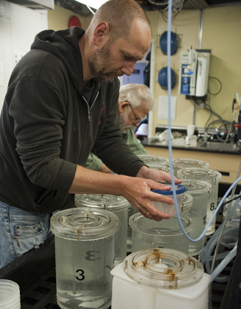 Henk-Jan carries sample buckets to the wet table in the wet lab on the Western Flyer.