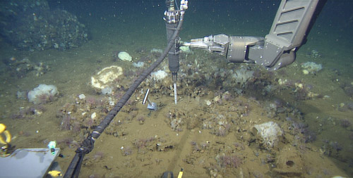 "The ROV manipulator holds the laser Raman tip into the sediment where we found small patch of bacterial mat. To the left of the laser, you see the metal T-handle of the ""peeper"", which was left in the sediment for over 30 minutes."