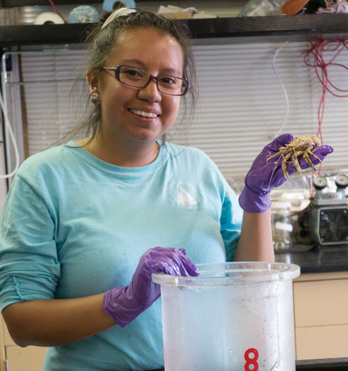 Yossellin holds a galatheid crab that was collected using a suction sampler.