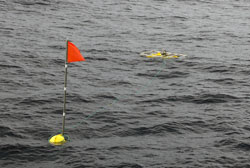Spar buoy and baited camera system return to the surface after 24-hours in the deep.
