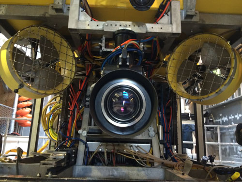 The ROV Doc Ricketts camera offers a close-up look at what lives in one of the world's most oxygen-limited environments.