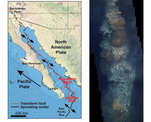 (left) Tectonic map of the Gulf of California showing the locations of Alarcón Rise, Pescadero Basin, and La Paz, Mexico. The northwestward movement of the Pacific Plate, on which the Baja Peninsula rides, relative to the North American Plate is responsible for the spreading of the East Pacific Rise mid-ocean ridge system, the Alarcón Rise, and the smaller spreading centers up in the gulf, and also for the strike-slip motion in the transform faults between spreading centers and eventually of the San Andreas Fault, which begins at the NW end of the gulf. (right) Hydrothermal chimney in the Ja Sít vent field discovered on the Alarcón Rise in 2012. This image mosaic from ROV Doc Ricketts video shows the upper half of a 13-meter tall black smoker, and the colorful community of chemosynthetic bacteria, tube worms, crabs and fish supported by the >300º C, mineral-rich vent fluids.