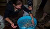 Judit Pungor keeps the octopus contained before releasing it back into the ocean.