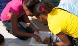 Students sort through Sargassum to find crabs and shrimp.