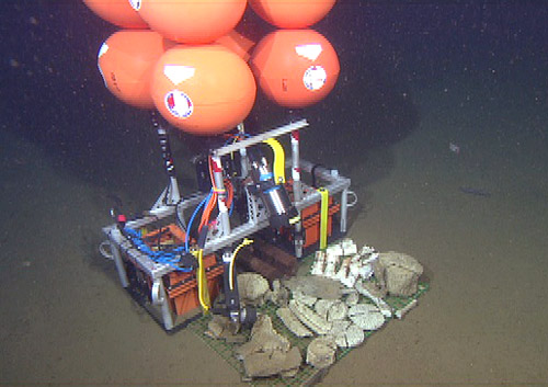 This is an image from the ROV of the bone camera deployed on the seafloor.