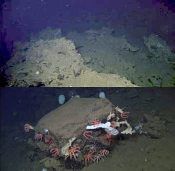 Top: At the summit of the ridge, we saw large pieces of carbonate rock. Bottom: As we descended into the valley, there were large boulders made of basaltic rock, this one, with many sponges and brisingid sea stars growing on it.