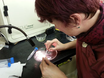 Kat Bolstad dissects the eye of a deep-sea squid.