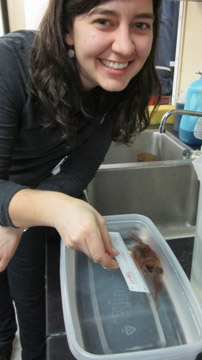 Stephanie Bush measures a swordfish squid.