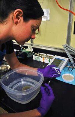 Josi Taylor works in the ship's lab to test the internal chemistry of animals following treatment with variable CO2 levels in the BRS.
