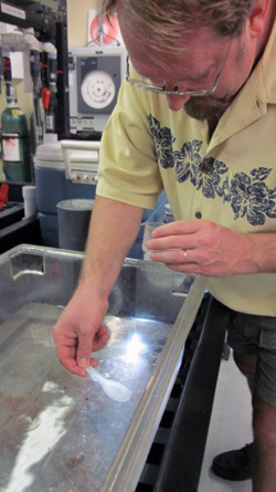 Erik Thuesen scoops out tiny ctenophores (comb jellies) to use for his respiration experiments.