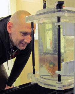 Henk-Jan Hoving observes a squid collected with ROV Doc Ricketts.
