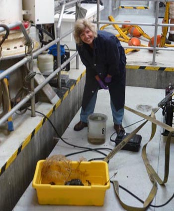 When the remotely operated vehicle (ROV) arrives back on the ship, biologists converge to gather their samples as quickly as possible. Linda Kuhnz in the