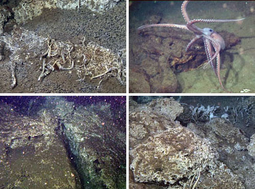 A few of the other sights found at a depth of about 1,570 meters (5,150 feet) in the Gulf of California. Clockwise from top left: tube worms, a benthoctopus putting on a little dance for the science visitors, carbonate mounds, and large rock formations.