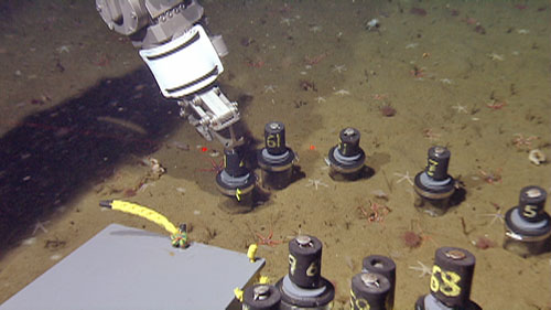 The manipulator arm taking push cores in the fault scarp region. These are used for both biological collections and geology sediment sampling. The pilots have very fine control—they can insert the push core over a small animal like the white seastar captured in the push core second from right. We've had a wonderful collaboration of biologists and geologists this week, sharing samples like these push cores and pitching in to help each other out.