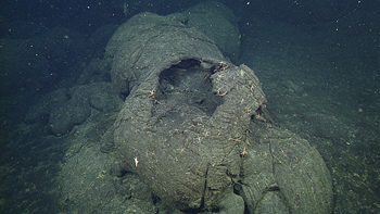 A pillow lava tube has cracked open and drained, leaving a thin outer crust that is easier to sample than solid pillows.