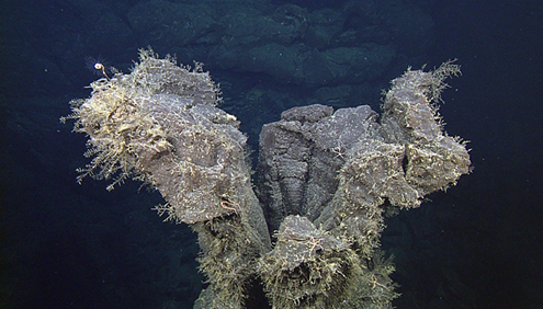 hydroids colonizing a hollow lava pillar