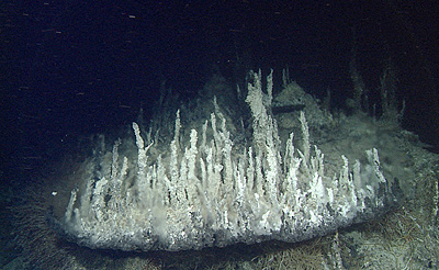 hydrothermal chimneys in Pescadero Basin