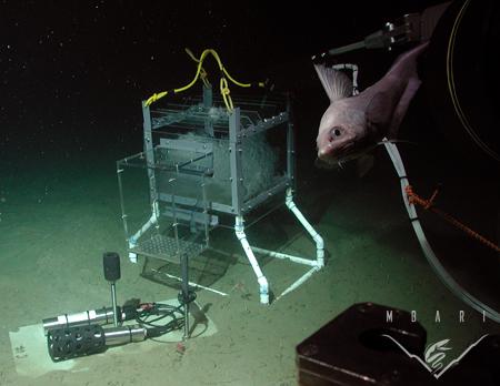 In situ CO<sub>2</sub> experiment