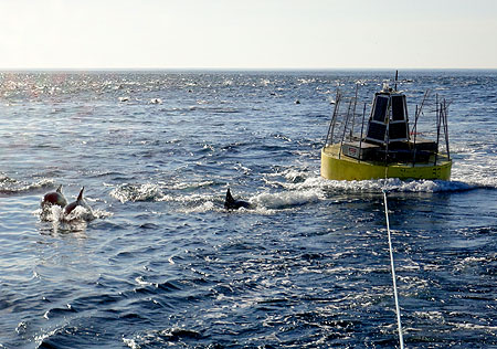 wave-power buoy alongside a pod of dolphins