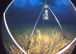 SeeStar camera system mounted on a tripod beneath the Antarctic ice near McMurdo Station. Image courtesy of Stacey Kim, Moss Landing Marine Laboratories.