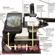 Steinberg_Cellscope