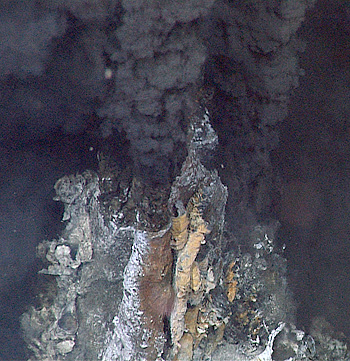 Deep-sea hydrothermal vents, such as this one in the Gulf of California, seem like primeval habitats, isolated from events on land or at the sea surface. However, ancient fossilized vent sites appear to have been colonized by different species of animals than the ones that scientists see at vents today. Image: ©2012 MBARI