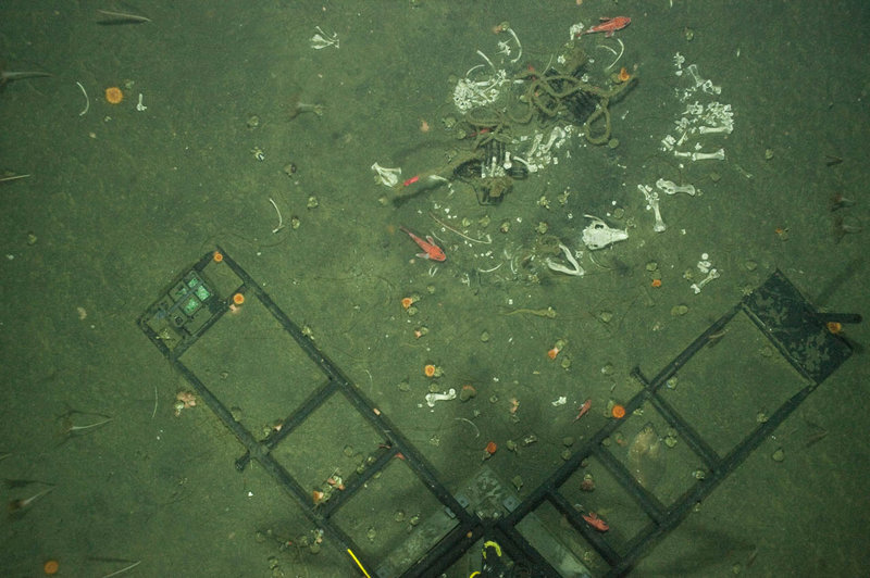 Pig bones, sea pens, anenomes, snails, and flatfish next to the Eye-in-the-Sea camera frame. Photo taken with imaging AUV.