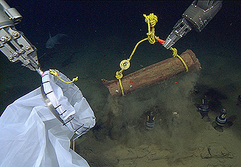 Researchers use the two manipulator arms on MBARI's remotely operated vehicle Doc Ricketts to collect a bundle of acacia wood 3,200 meters below the surface. The arm on the right has picked up the wood bundle by its yellow rope handle. This bundle will be placed inside the white collecting bag being held by the arm on the left. Image: © 2012 MBARI