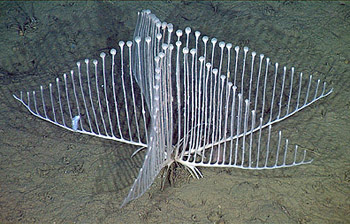 Image result for harp sponge