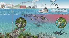 Artist's rendition of anthropogenic CO2 and the resulting Ocean Acidification