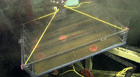 Image captured from a video camera mounted on underwater remotely operated vehicle DocRicketts on dive number 302. The original MBARI video tape number is D0302-02HD.  This image is from timecode 04:07:33:01 and time Tue Oct 18 00:33:20 2011 GMT.  The recorded raw location and environmental measurements at time of capture are Lat= 36.712373  Lon= -122.187623  Depth= 886.94 m  Temp= 4.263 C  Sal= 34.416 PSU  Oxy= 10.013 ml/l  Xmiss= 70.10%.  The Video Annotation and Reference system concept: associations for this image is 'physical object'.