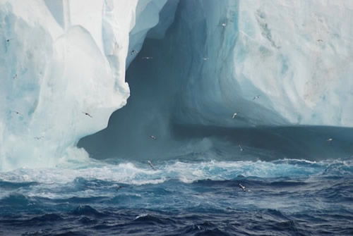 Seabirds in flight around an iceberg in the Weddell Sea. Photo by Johnny Pierce.