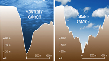 Cross-sections of the Monterey Canyon (left) and Grand Canyon (right) shown at the same scale demonstrate that these features are similar in size and shape. Both canyons are conduits through which massive volumes of sediment move. While water flowing in the Colorado River carved the Grand Canyon, a directly analogous process is not known to have occurred within Monterey Canyon.