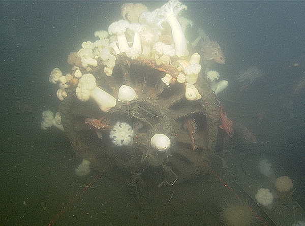 One of two jet engines discovered in September 2014 on the Monterey Bay seafloor. The engine has been colonized by rockfish and sea anemones. Image: © 2014 MBARI