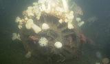 Jet engine on the seafloor of Monterey Bay