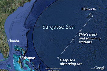 sargasso-sites-350