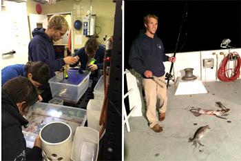 Left, Ben Burford, former summer intern, helps Kris Walz, Stephanie Bush, and Freya Goetz sort through the trawl collection. Right, Ben jigging for Humboldt squid.