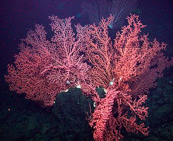 Image credit: (c) 2006 MBARI / NOAA