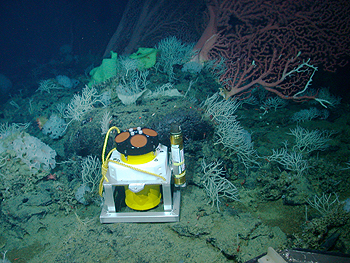 Marine biologists still do not know exactly why corals and sponge grow so large and abundant on seamounts. However, studies using current meters, such as this one on Davidson Seamount, may provide clues. Image: © 2006 NOAA / MBARI