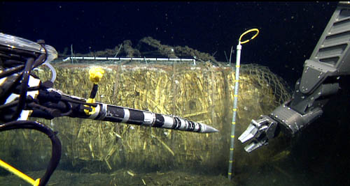 The ROV-operated oxygen probe and pore fluid sampler about to be inserted into the corn bale.