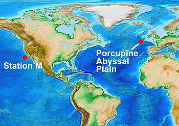This map shows the locations of the long-term, deep-sea study sites at Station M and the Porcupine Abyssal Plain. Base map courtesy of NOAA (ETOPO1 Global Relief Model)